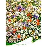 BESTIM INCUK - 200 semillas de prueba de humedad de semillas coloridas anegamiento tolerancia flores silvestres mezcla semilla de flor