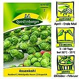 Quedlinburger Rosenkohl Sorte Roodnerf - Brassica oleracea var. Gemmifera / Ertragreice mittelgroße Rosen / Ernte Oktober bis Februar