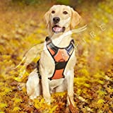 Dog Harness No Pull Padded Easy Fit Puppy Chest Harness Car With Handle Front Clip Adjustable Reflective Breathable Soft Mesh Lightweight Outdoor Training Walking Comfort Control For Large Dogs Size :-Large 1 Piece Color May Vary