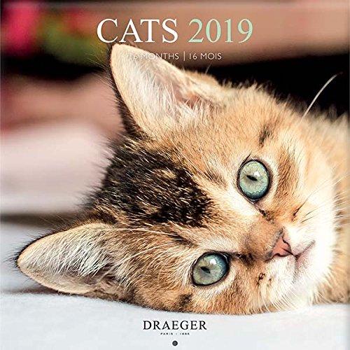 draeger 79003091grande calendario da parete 29x 29cm Gatti 2019