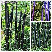 50 semillas de bambú Bambusa semillas de árboles gigantes rara Lako MOSO negro semillas de bambu bambú paquete profesional para el jardín de verde