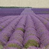 "Van Eyck Canvas Wall Art Work Oil Painting Violet Lavender 16"" x 16"" Inches yapurple3"