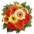 """Blumenstrauß Blumenversand """"Gerberakuss"""" +Gratis Grußkarte+Wunschtermin+Frischhaltemittel+Geschenkverpackung von Blumen-King.de auf Du und dein Garten"""