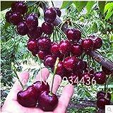Bloom Green Co. 30 Stück Amerika Kirsche Bio-Frucht Plantas Bonsai Süßkirschen Frutas Baum Grove Mini-Garten-Dekoration Plantas Tropicales: gemischt