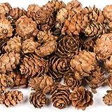 Bastelsets mit natürlichen Lärchen-Zapfen – Kreatives Bastelmaterial für Weihnachtliche Bastelarbeiten, Kränze Oder Dekorationen (Packung mit 250 g)
