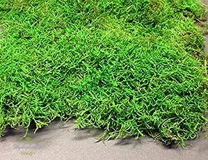 Moosmatten Konserviert Deko Moos 1 Lage Flachmoos Kaufen Haltbar  Moosplatten Für Dekoration Mit Moss,