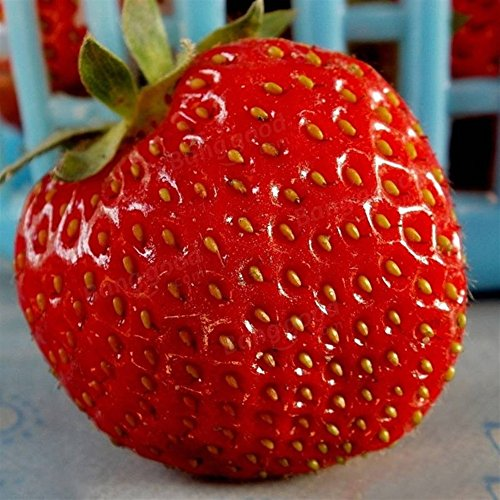 Doubleer 100Pcs Giant Rouge Fraise Graines Jardin Fruits Graines