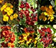 Premier Seeds Direct WAL02F Wallflower English Bedding Mixed Seeds (Pack of 1800)