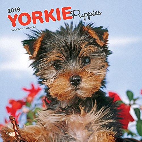 Yorkshire Terrier Puppies - Yorkshire Terrier Welpen 2019 - 18-Monatskalender mit freier DogDays-App: Original BrownTrout-Kalender [Mehrsprachig] [Kalender] por Inc. Browntrout Publishers