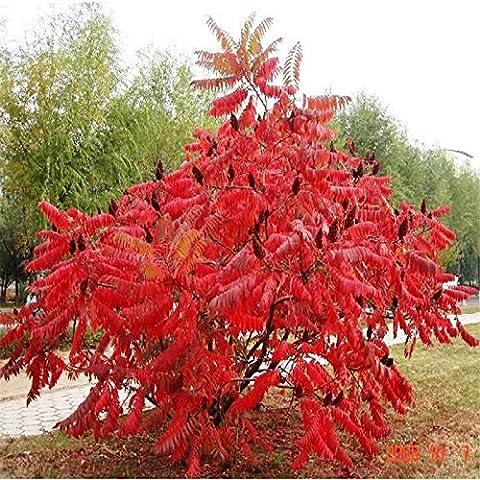 torcia Red Tree semi - 20 pc / lotto - Red Fioritura Alberi