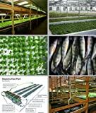 Aquaponics - Entrepreneurs Embrace Technology that Holds Key to Strengthening Local Food Systems and Increasing Food Security (English Edition)