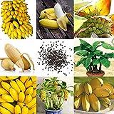 Portal Cool 08Ce 28C3 100 Stücke Kostbare Seltene Zwerg Bananenbaum Bonsai Samen Exotischer Hausgarten