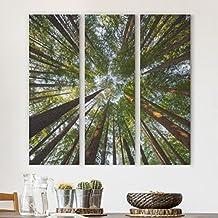 Bilderwelten Leinwandbild 3-teilig - Mammutbaum Baumkronen - Panoramen hoch 3:1, Leinwand XXL Leinwanddruck Wandbild, Größe HxB: 3x 90x30cm
