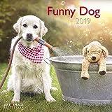 Funny Dog 2019 - Broschürenkalender, Tierkalender, Wandkalender - 30 x 30 cm