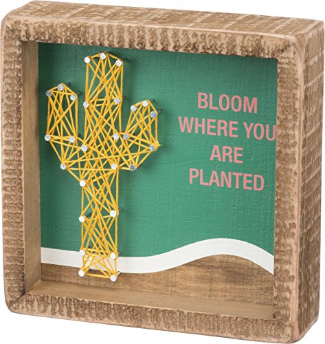 Primitives by Kathy Box Sign - Bloom Wo Sie gepflanzt W/String Art Cactus- 15,2 x 15,2 cm - Katzen Cactus Box