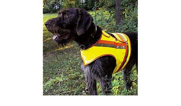 Jagdh/ütte Sachsen Reflektorweste Gr z.B. St/öber-, kleine Vorstehhunde 3 1 Glasuntersetzer mit jagdlichem Motiv TESTSIEGER