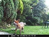 Crenova 12MP 1080P HD Wildkamera - 6