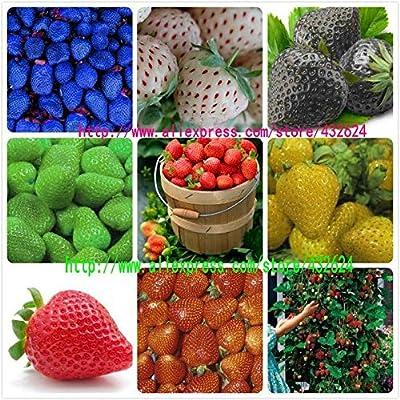 9kinds Erdbeersamen, weiß, gelb, blau, schwarz, rot, grün, große Erdbeeren, klettern, insgesamt 900 Samen Obstgarten plants.bonsai von SVI - Du und dein Garten