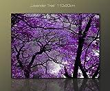 FANTASTISCHES Wandbild purple lila violett (lavender_tree_110x80) Baumbild PAUL SINUS Bild xxl günstig & modern Bild auf Leinwand und Keilrahmen, der aktuelle Deko Einrichtung modern! Wandbilder Modern Art Pics in hoher Qualität als original Kunstdruck - Motiv Foto als Bild. Günstig, modern und stilvoll - Qualität aus Deutschland