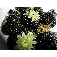 Fresa Negro - 50 Semillas