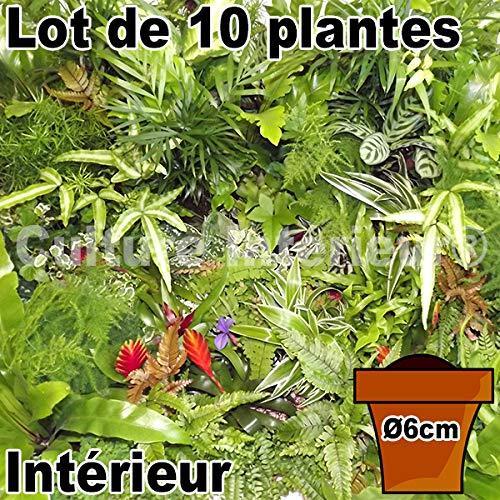 Lot de 10 plantes pot Ø6cm pour mur végétal intérieur