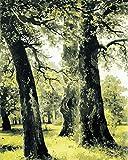 zhxx Malen Nach Zahlen Erwachsene Riesenbäume Wald Landschaft DIY Digital Wall Art Leinwand Gemälde Geschenk Home Decor,Rahmenlos 16X20 Zoll