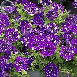 AMZT New Petunia Blue Sky Petunia Samen, 200+ Samen