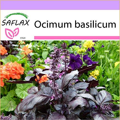 SAFLAX - Kräuter - Rotes Basilikum - 200 Samen - Ocimum basilicum