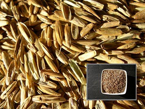 Ray Grass Italien Sultano - 2 sachets de 15 grammes - Lolium Multiflorum - Italian Ryegrass - (Engrais Vert - Green Manure) - SEM02