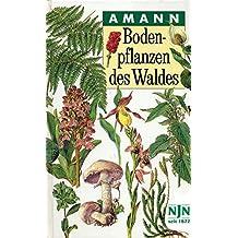 Bodenpflanzen des Waldes