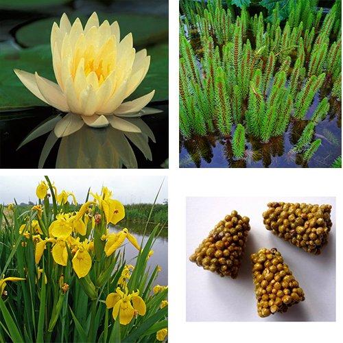 starter kit ninfea + 2 piante ossigenanti + 2 piante palustri + concime (ninfea gialla)