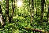Artland Qualitätsbilder I Alu Dibond Bilder Alu Art 90 x 60 cm Landschaften Wald Foto Grün C7LS Wald