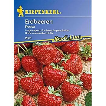Kiepenkerl Erdbeeren Fresca