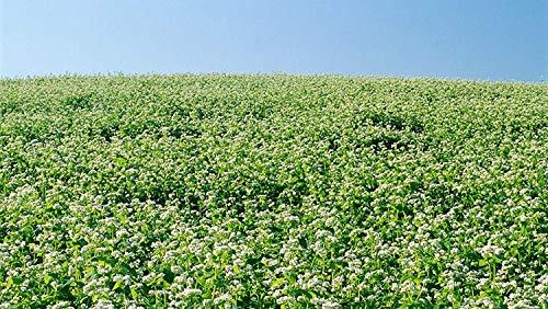 3LB Food Plot Bulk Buckwheat Seeds Whitetail Deer Goose Honey Bees