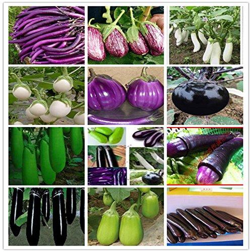 700PC weltweit umfassendste Vier Arten von Gemüse und Obst Samen. (RADISH, Auberginen, Paprika, Tomatensamen) Bunte Garten