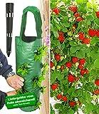 BALDUR-Garten Hänge-Erdbeer...