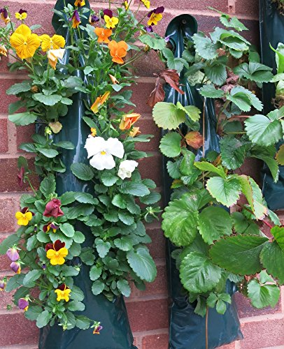 Planteurs Flower Fraise à suspendre pour 10 dos-bagagerie Petit Offre