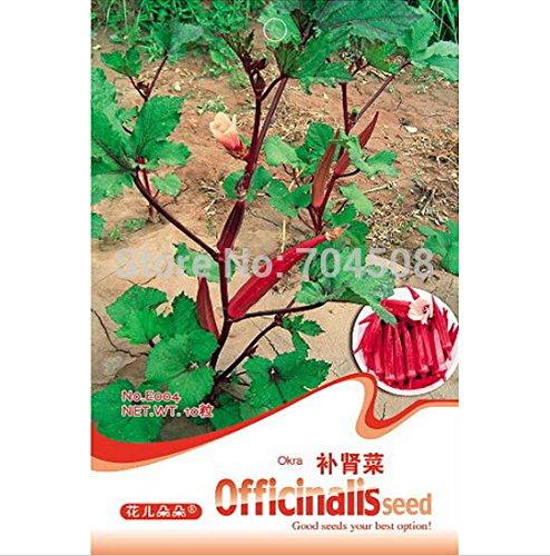 FD1289 Bon effet Herb rein plat Graine Okra Graine Abelmoschus ~ 1 Pack 10 Graines ~