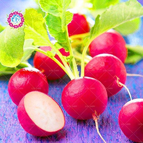 11.11 Big Promotion! 100 pcs / lot graines de radis carotte semences de légumes verts en pot dans le jardin et la maison des graines de plantes d'herbes fraîches annuelles 2