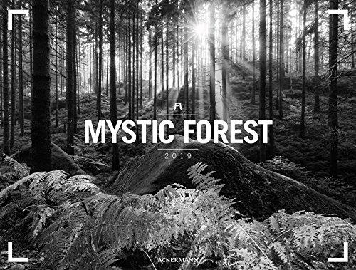 Mystic Forest - Ackermann Gallery 2019, Wandkalender in Schwarz-Weiß im Querformat (66x50 cm) - Panoramakalender mit Wald/Bäumen mit Monatskalendarium