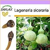 SAFLAX - Afrikanische Riesenkalebasse - 15 Samen - Lagenaria siceraria