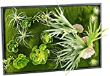 Carlo Milano Wandbegrünung: Vertikaler Wandgarten Knut mit Deko-Pflanzen, 60 x 40 cm (Minigarden)