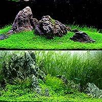 TOPmountain Decoración de Semillas de Hierba de Agua 1000 unids/Bolsa Semillas de Plantas de Acuario de Paisaje