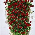lichtnelke - Kletterrose ' Santana ' leuchtend blutrot / 6L von Lichtnelke Pflanzenversand bei Du und dein Garten
