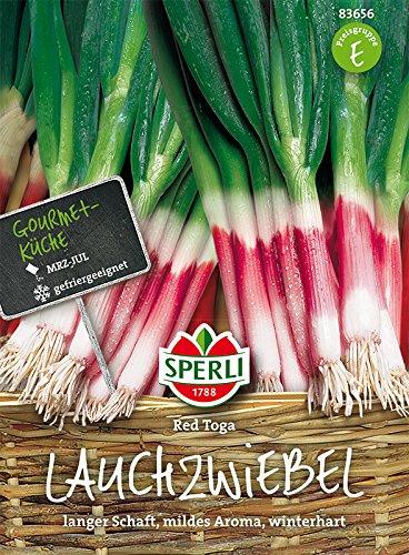 Sperli Lauchzwiebel Red Toga | junge Ernte | gefriergeeignet | Packung Samen