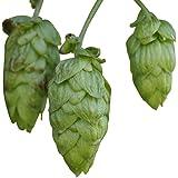 Echter Hopfen (Humulus lupulus) 25 Samen -Selbst Bier brauen-
