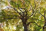 Posterlounge Leinwandbild 180 x 120 cm: Herbstbaum an Einem warmen Sommertag von Editors Choice - fertiges Wandbild, Bild auf Keilrahmen, Fertigbild auf echter Leinwand, Leinwanddruck