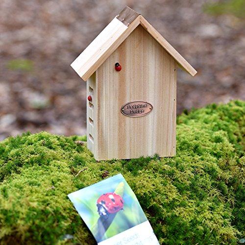 Refugio para atrapar mariquitas (incluye semillas de flores)