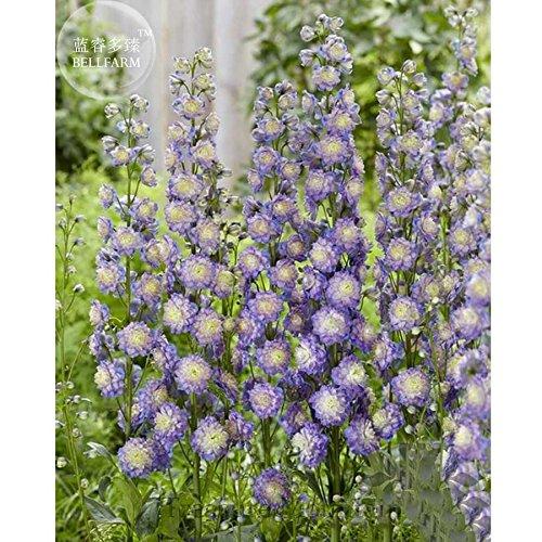 Bellfarm différents types de fleurs vivaces Delphinium, 100 graines, plantes grandes fleurs beau jardin de la maison de fleurs TS273T TS273T x T12