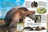memo Kids, Band 18: Reptilien: Schlangen, Krokodile und Echsen - 3